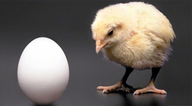 chicken-or-egg2